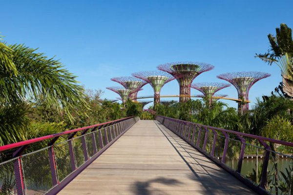 Solar-Powered Supertrees Opens In Singapore