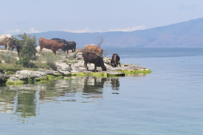 Moss covered shores of Sevan