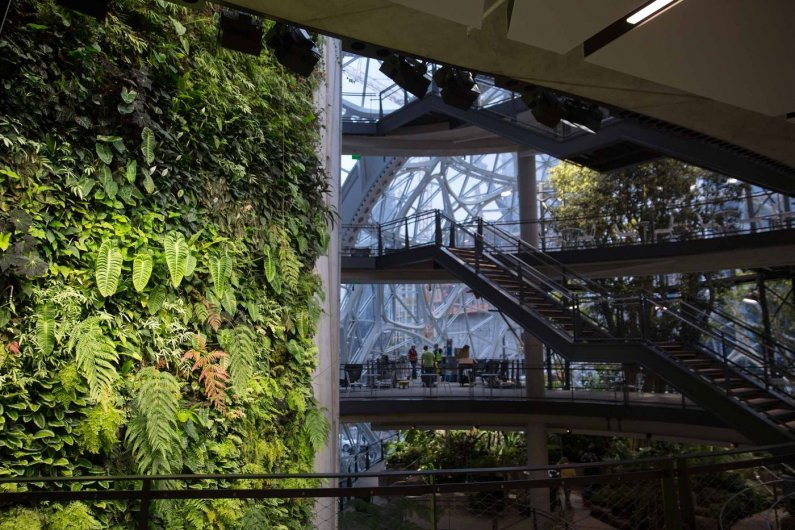 Forest Inside Amazon's New Office